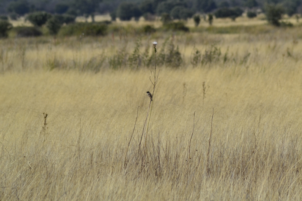 Small bird sitting in long grass