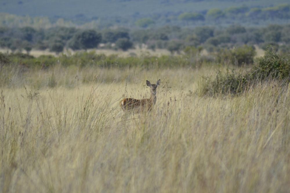 Deer National Park Spain