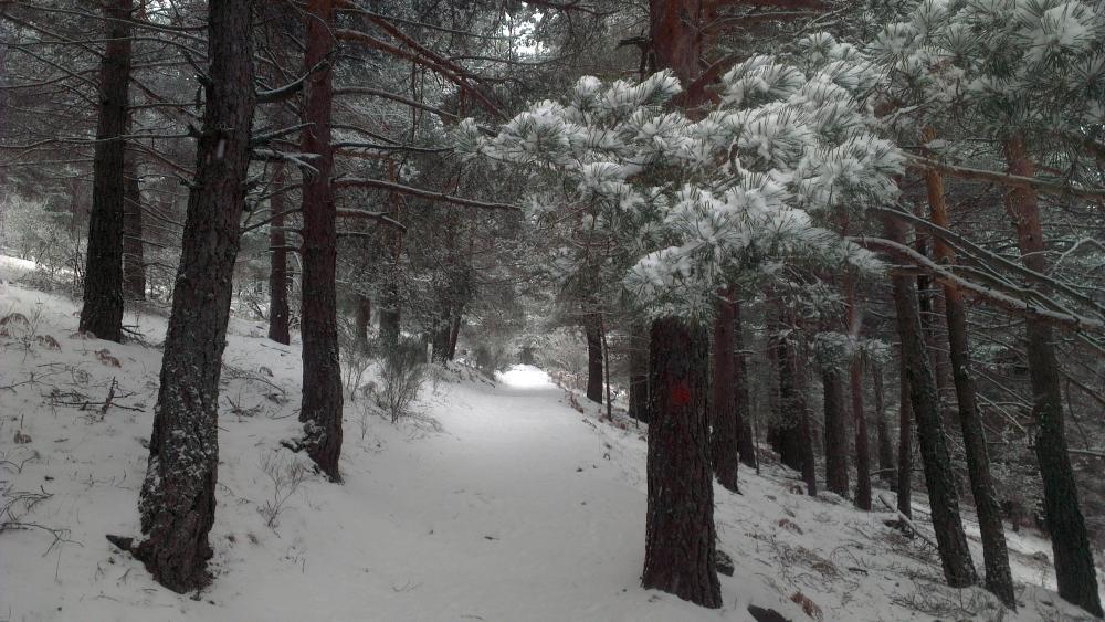 Snowy Path - Cercedilla