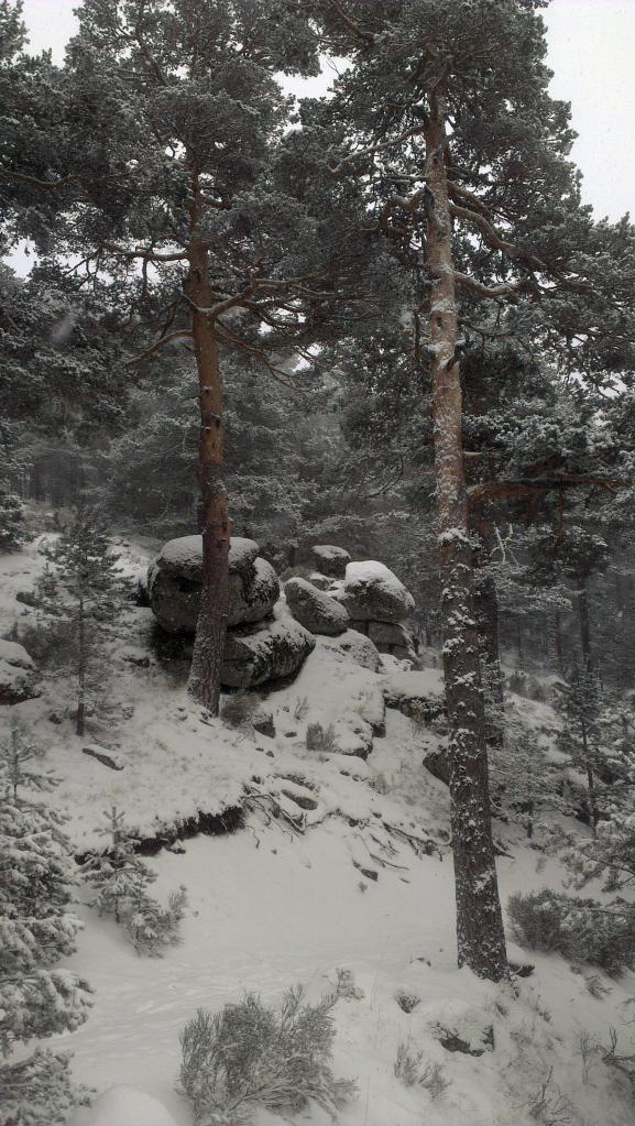 Snowy Tree - Cercedilla