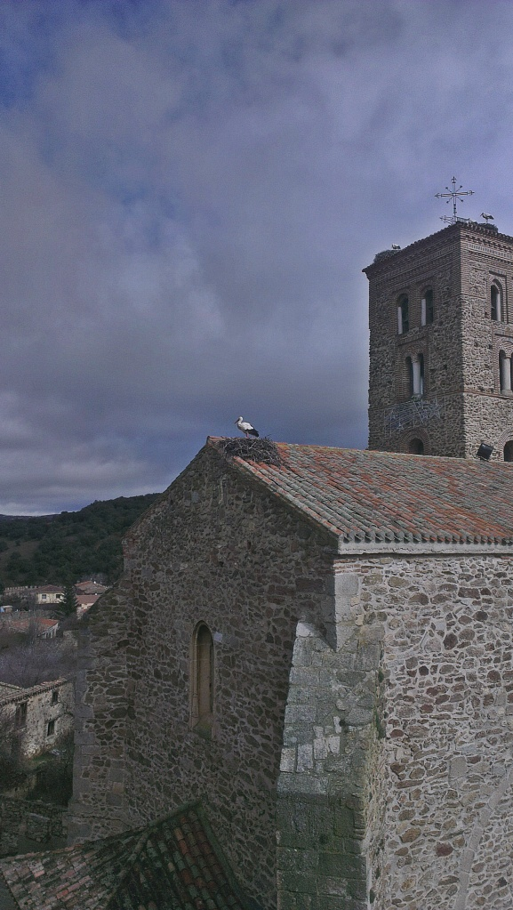 Stork on top of church