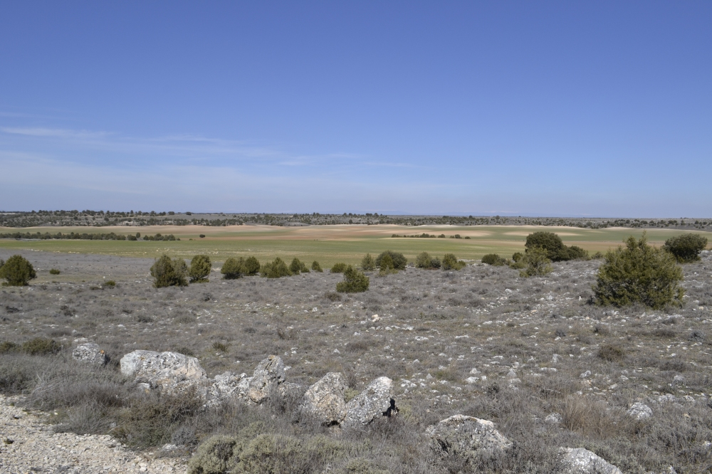 Farmland Segovia