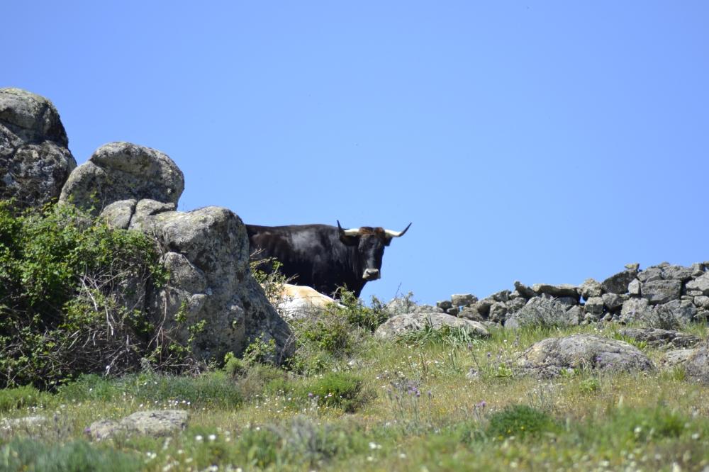 Bull El Escorial
