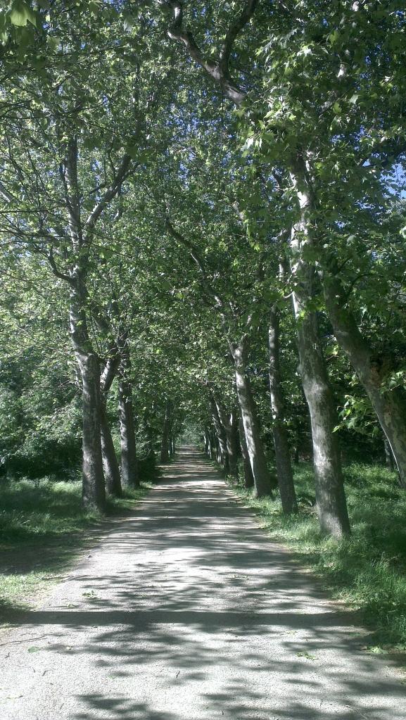 Bosque Herreria